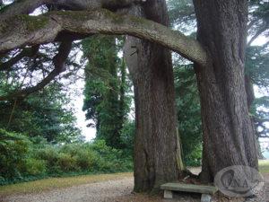 6.エムブリー荘の庭に立つ大樹(ナイチンゲールはこのベンチで本を読んだ)